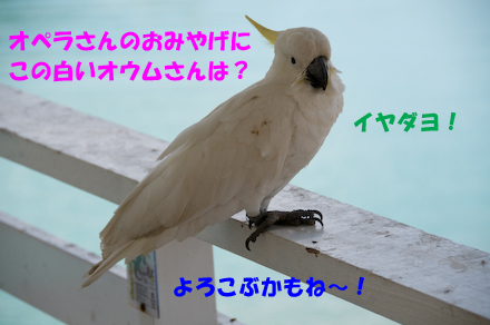 _DSC2400.jpg