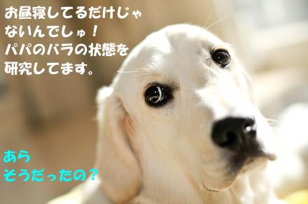 _DSC2851.jpg