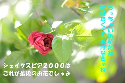 _DSC2854.jpg