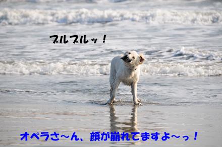 _DSC3249.jpg