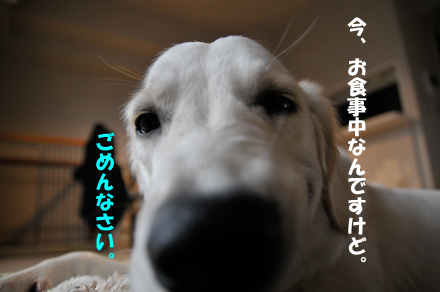 _DSC3452.jpg
