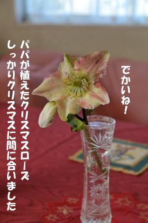 _DSC3510.jpg