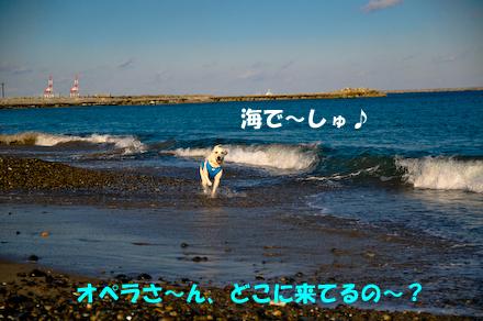 _DSC3713.jpg