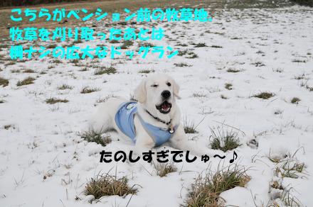_DSC3903.jpg