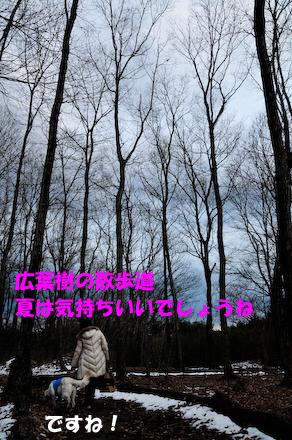 _DSC3931.jpg