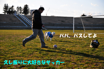 _DSC4129.jpg