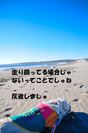 _DSC4226.jpg