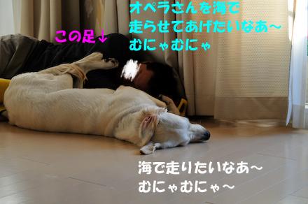 _DSC4249.jpg