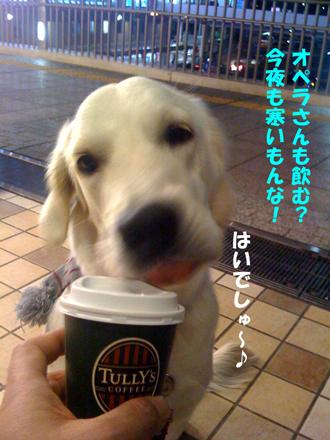 photo_20081227232531.jpg