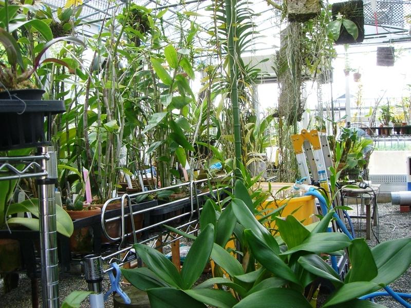 我が家の温室3