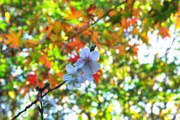 sakura4_20091108194105.jpg