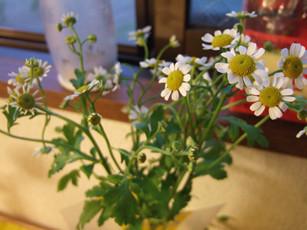 小さな白いお花