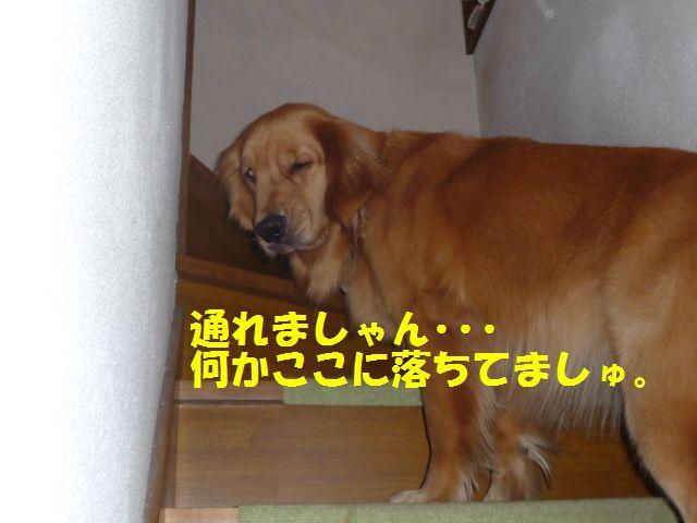001_20090904024342.jpg