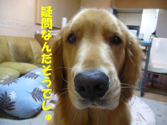 003_20091114171537.jpg