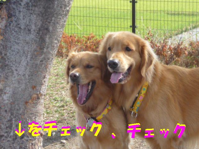 006_20091031044603.jpg