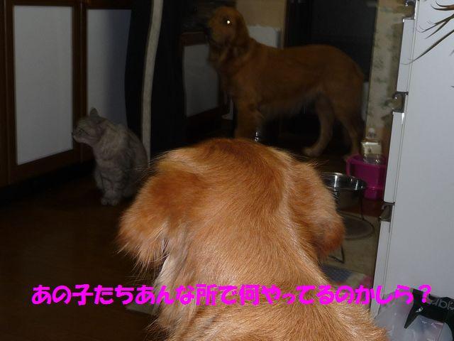 009_20081109234917.jpg