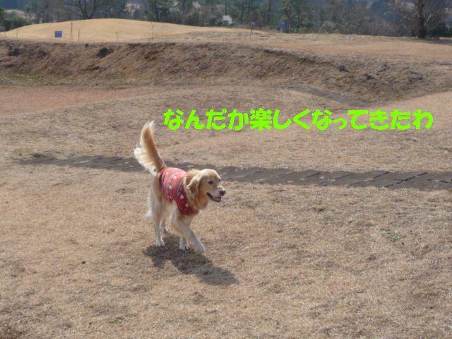 010_20090131003033.jpg