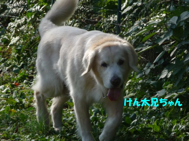 011-1_20081120012751.jpg