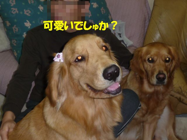 013_20081206004757.jpg