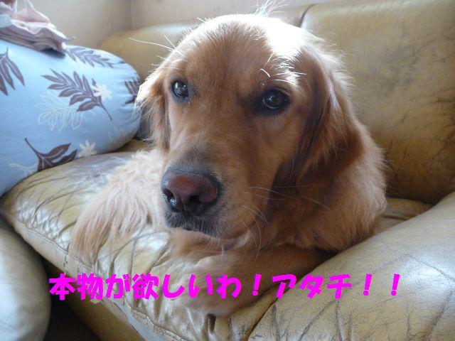 022_20090827155249.jpg