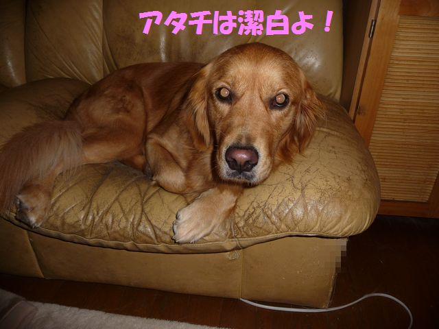 039_20081020223236.jpg
