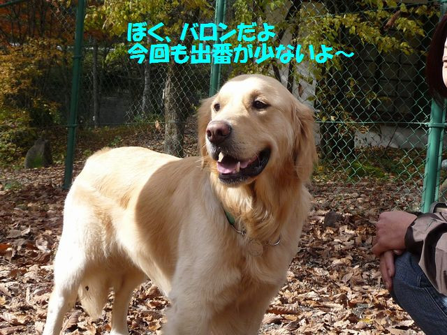 050_20081108013440.jpg