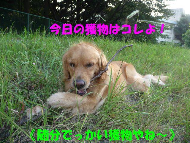 063_20090824003936.jpg