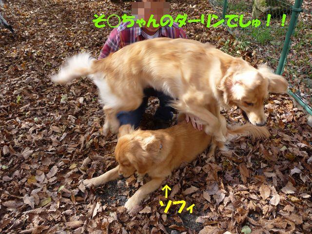 111_20081103223132.jpg