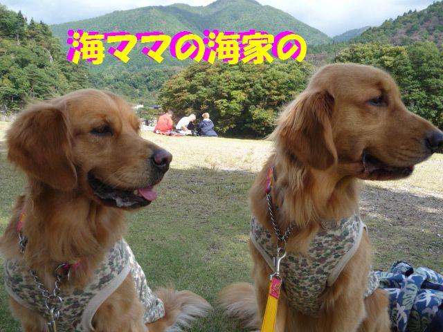 212_20091031045530.jpg