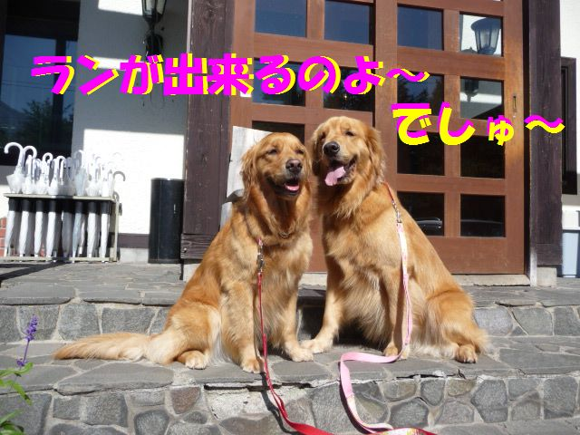 342_20091031044603.jpg