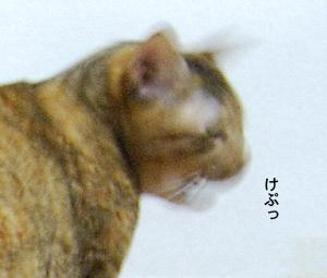 20081104_03
