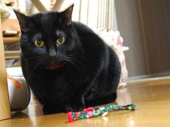 黒猫DRE「はて?…これは?」
