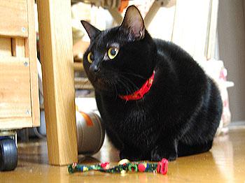 黒猫DRE「まさかこりゃ奴の…」