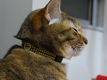 PAMの黄色い首輪