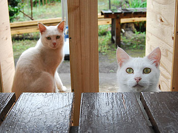 雨宿りの二匹