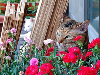 花を愛でるパム