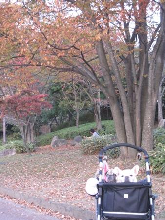 紅葉とパオ&みゅうみゅう♪
