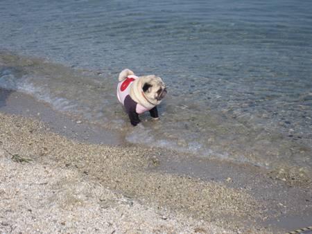 喜んで琵琶湖に入るみゅうみゅう