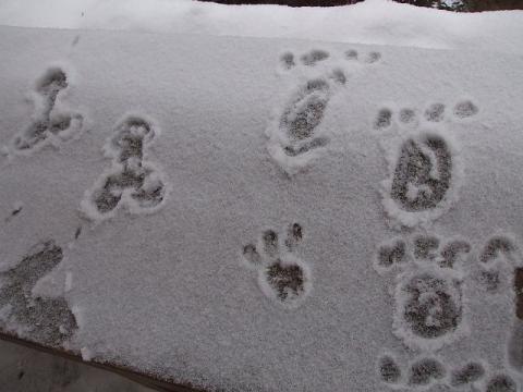 お猿の足跡