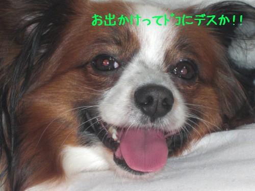 1_20090214194349.jpg