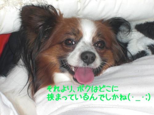 2_20090214194451.jpg