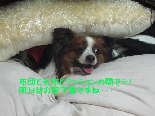 3_20090214194601.jpg
