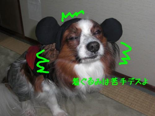 5_20090208193204.jpg