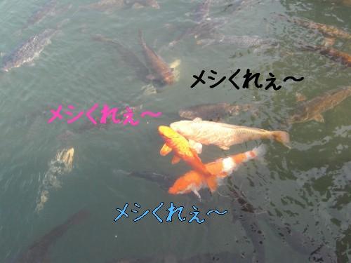 7_20090215195100.jpg