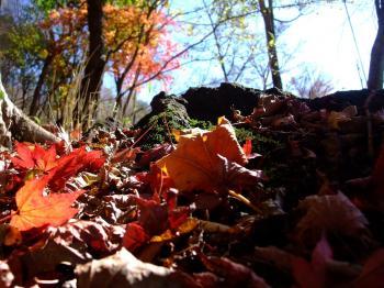 栗野岳2009 068 - コピー