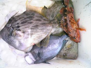 釣りカワハギ 008