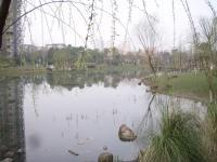 マンション庭