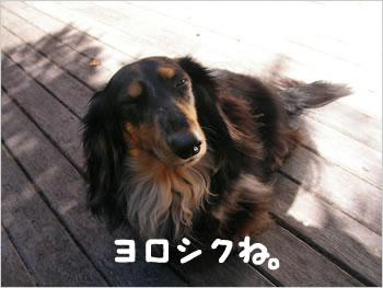 20080409_ヨロシクね