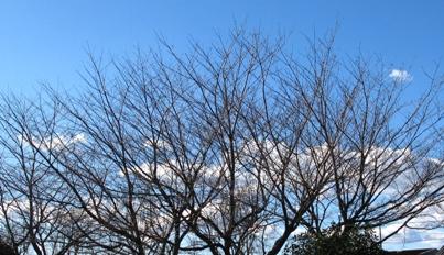 お正月の空