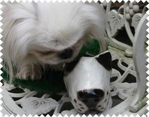 _犬の匂い